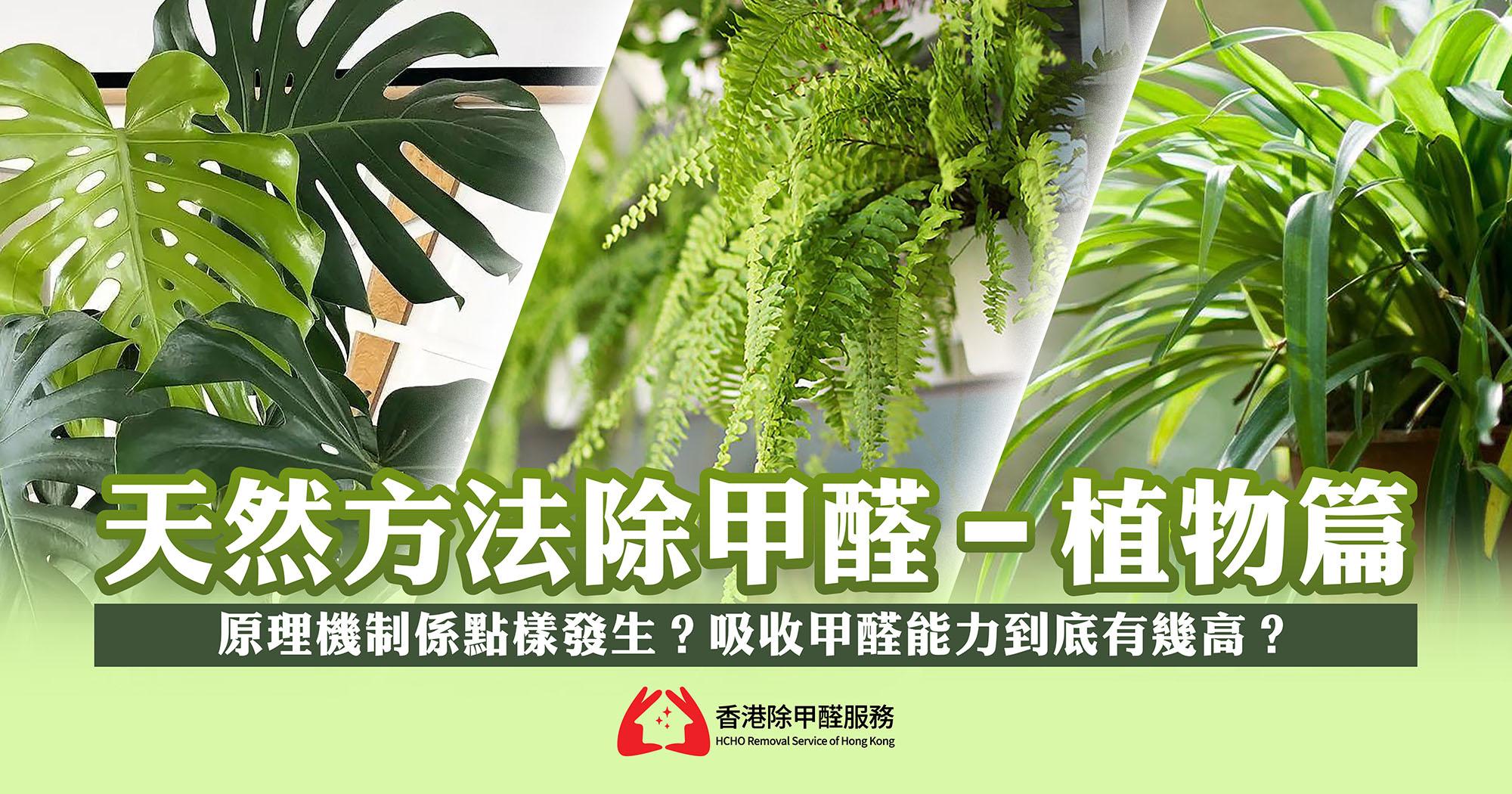 天然方法除甲醛-植物篇